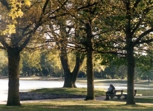 Baumgruppe am Silbersee